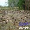 13.05.2017. В Башкирии для строительства гипермаркета вырубили деревья в городском парке